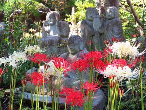 常泉寺の羅漢と彼岸花