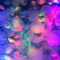 クラゲの加茂水族館