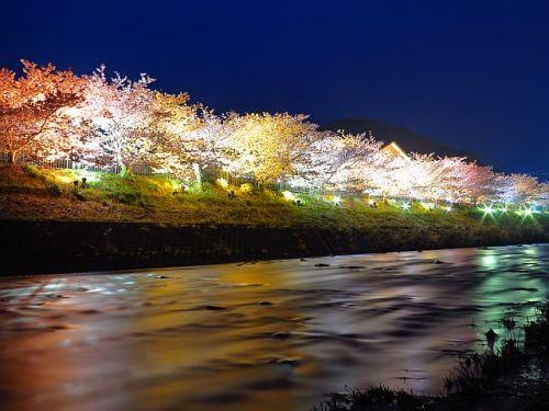 河津桜満開の河津(夜編)