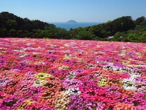 能古島の5月の花々