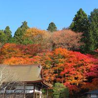 湖東三山の紅葉(3)~百済寺