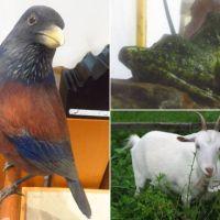 奄美大島の希少動物たち