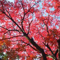 六義園の紅葉(昼編)