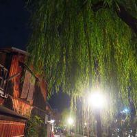京都のかき氷と竹の寺など