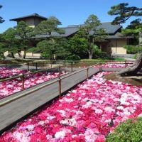 大根島・由志園の池泉牡丹