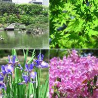 広島城と縮景園